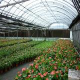 야채와 과일에 사용되는 다중 경간 녹색 집 설치
