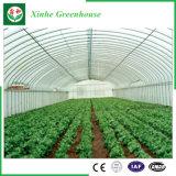 Groenten/Tuin/Bloemen/de Plastic Serre van het Landbouwbedrijf