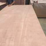 Pegamento rojo del grado E1 de la madera contrachapada BB/CC de la madera dura