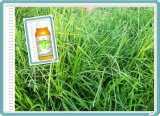 Glufosinato-Amonio del herbicida, Glufosinato-Amonio el 95% SL