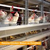Автоматические курицы клеток батареи цыпленка слоя кладя