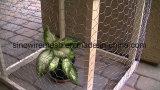 Beschichtetes Draht-Filetarbeit Kurbelgehäuse-Belüftung und galvanisierte überzogenes für Huhn-Draht