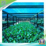 Redes al aire libre de la cortina de la agricultura del verde del HDPE