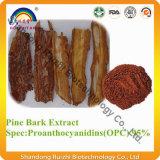 Extrait d'écorce de pin OPC 95% de qualité supérieure PE 10: 1 4: 1 20: 1