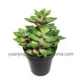 Succulents artificiales de la planta con la planta