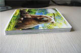 도매 학교 학생 Copybook 두꺼운 표지의 책 구성 노트북