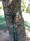 Porte des courroies d'oscillation d'arbre d'hamac avec le système s'arrêtant de poche