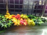 Hojas coloridas artificiales del Ficus de los fabricantes de China