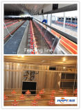 Qualité Automatic Poultry Equipment pour Broiler From Chine