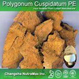 100% naturel extrait de Polygonum Cuspidatum, Giant renouée Rhizome Extrait 10% -99% resvératrol