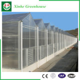 野菜のためのポリカーボネートの温室のHydroponicsシステム
