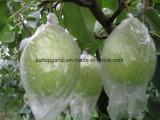 Neues Getreide frische grüne Ya Birne