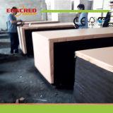 La película Shuttering de la madera contrachapada de la base de la madera dura hizo frente a la madera contrachapada