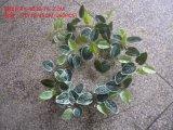 Piante e fiori artificiali della vite d'attaccatura Gu-Mx-IVY003