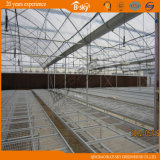 Multi-Span Singolo-Layer Film Greenhouse per Seeding