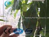 Freier Kopfstein-gekopiertes Glas mit Cer, ISO (3-8mm)
