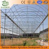 최신 판매 활력은 농업 단 하나 경간 또는 Muilti 경간 필름 온실을 포함했다
