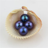 Granos naturales de la perla del pavo real de la talla grande de Snh 10-10.5m m