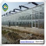 Multispan Hydroponik-landwirtschaftliches grünes Glashaus für Gurke