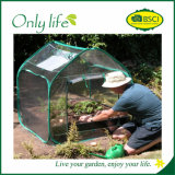 Pieghevoli pieghevoli quadrati di Onlylife coltivano la mini serra del traforo
