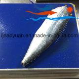 De volledige Vreedzame Makreel van het Noorden van het Lichaam (PM004)