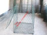 الصين مصنع من [بفك] خضراء [غبيونس/] [بفك] طلية شبكة [غبيون] ([إكسم-4])