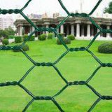 PVC Coated Hexagonal Wire Mesh для Chicken (YB-20)