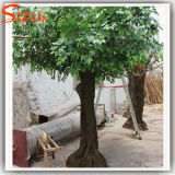 Árvore artificial do Ficus da fibra de vidro verde das plantas decorativas