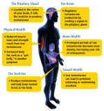 PCT Femara Anti Estrogen Steroids Aromatase Inhibitors di Letrozol per Men