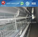 Cage automatique de poulet pour la grande couche de ferme