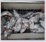 [مستب] - 80 بطاطا يغسل [بيلينغ مشن] سمكة جلد [بيلينغ مشن]