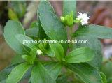 Естественный порошок 80%~98% Stevioside выдержки Stevia подсластителя