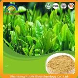 Extrait de thé vert organique avec Theanine