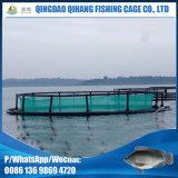 gaiolas de flutuação do quadrado de 6m * de 6m para o cultivo do Tilapia
