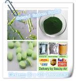 Poudre d'algues vertes de poudre de chlorella de poudre d'euglène