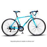 자전거 (ly 14)를 경주하는 고품질 싼 스포츠