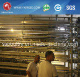 Cage de poulet de ponte d'oeufs à vendre