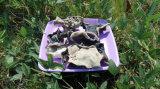 Грибок белизны задним черным высушенный грибком черный от Китая