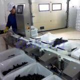 Selezionatrice del peso dei frutti di mare dei pesci che elabora soluzione