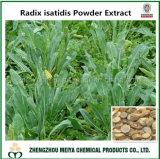 抗ウィルス性の薬、抗菌のための底のIsatidis /Isatis Indigoticaの城砦の粉のエキス