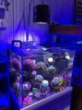 Iluminaciones completas teledirigidas calientes del acuario del espectro LED del item 60With90W