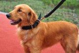 Collar ajustable de la correa de nylon de la correa del verde del ejército del metal del perro de animal doméstico