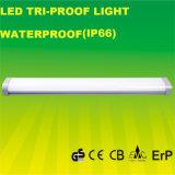 セリウムは4FT IP66セリウムが付いている防水LEDの照明灯を承認した