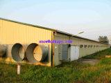 ワンストップのための現代デザイン鉄骨フレームの構造の家が付いている自動養鶏場装置