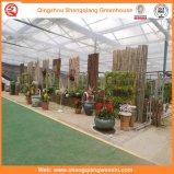 Agriculture/serre chaude commerciale de jardin de pellicule de polyéthylène pour des fleurs