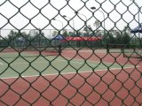 Elettro rete fissa del giardino della rete metallica di obbligazione della rete fissa di sport della rete fissa di collegamento Chain di Galvainzed
