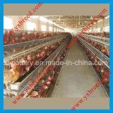 Machines de ferme de matériel d'aviculture avec le buveur de raccord
