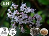 自然な吉草酸0.3~0.8%; &Nbsp; 4:1; 5:1のValeriana Officinalis