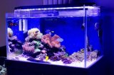 Les lumières marines d'aquarium de la haute énergie 120cm 144W DEL pour le récif coralien se développent