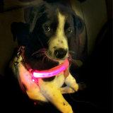 Leiband van de Veiligheid van de Uitrusting van de Kat van de navulbare de Gloeiende LEIDENE Hond van het Huisdier